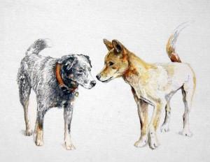 Tex Meets Dingo